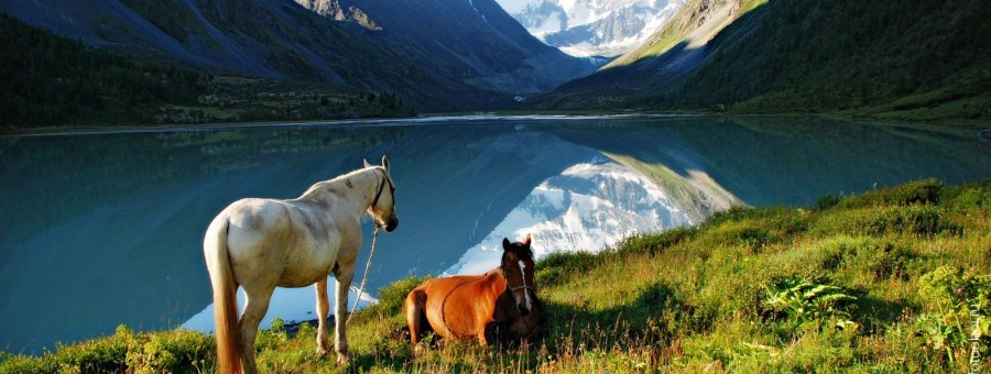 Конные туры к Белухе