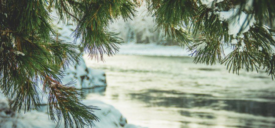 Катунь зимой