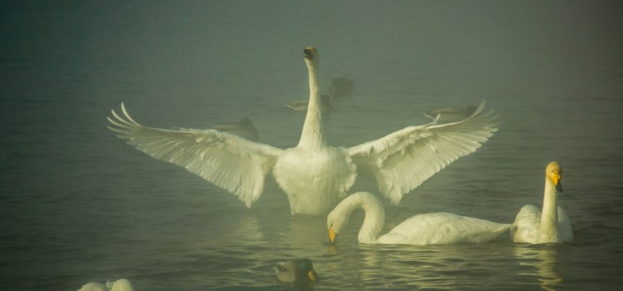 Расправляя крылья над водой