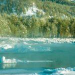 Ледяные берега Катуни