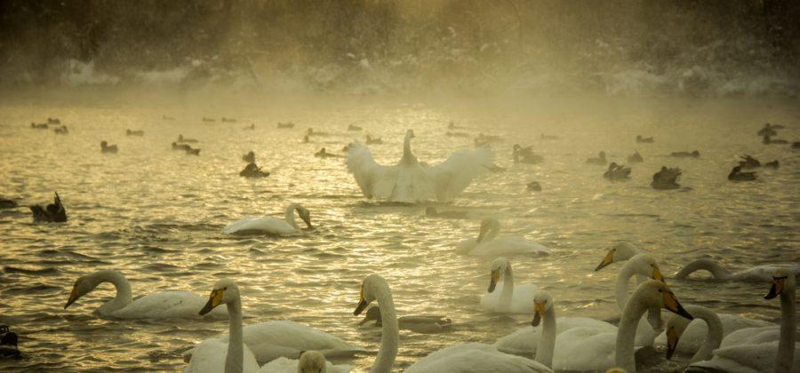 Вечернее спокойствие озера