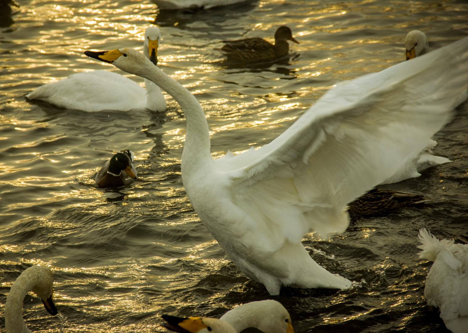 Лебединое озеро в -30