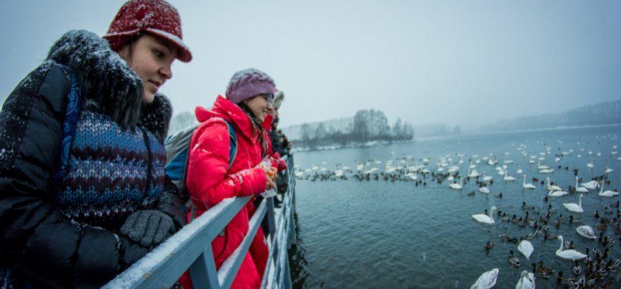 Лебединое озеро. Алтай